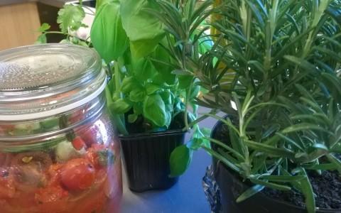 tomater basilika rosmarin