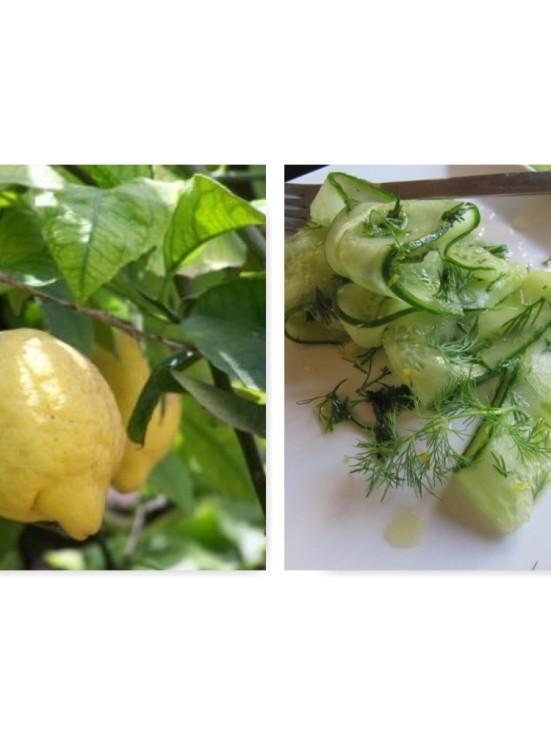 Citron dillgurka II